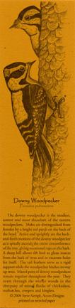 Downy Woodpecker Bookmark