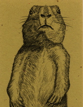 Prairie Dog Bookmark