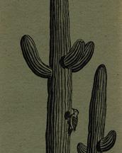Saguaro Cactus Bookmark