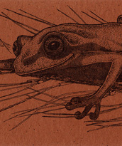 Treefrog Bookmark