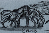 Zebras Bookmark