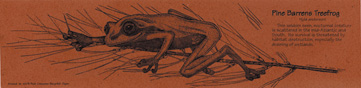 Treefrog Bookmark