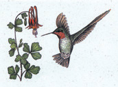 Hummingbird Stationery