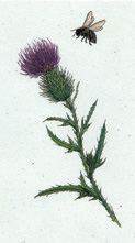 Thistle & Bee Stationery