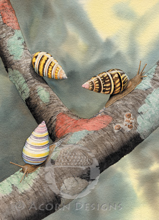 Florida Tree Snail Notecard