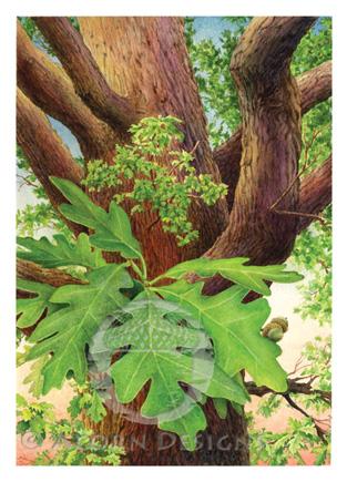 White Oak Notecard
