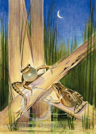 Spring Peepers Notecard