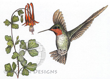 Ruby-throated Hummingbird Notecard