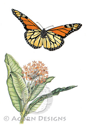 Monarch Butterfly and Common Milkweed Notecard