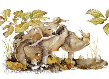 Milky Cap Mushrooms Notecard