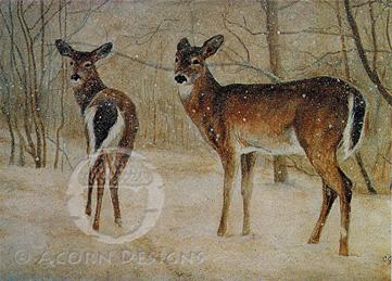 White-tailed Deer Notecard
