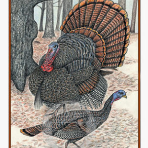 Wild Turkeys Notecard