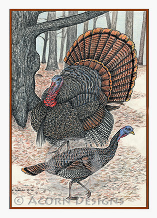 Wild Turkeys Notecard