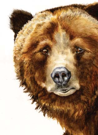 Grizzly Bear Notecard