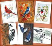 Feeder Birds Assortment