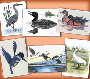 Water Birds Assortment
