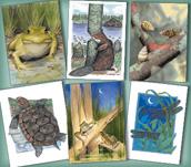Wetland Wildlife Assortment