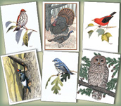 Woodland Birds Assortment
