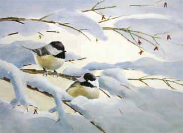 Chickadee Courtship Notecard