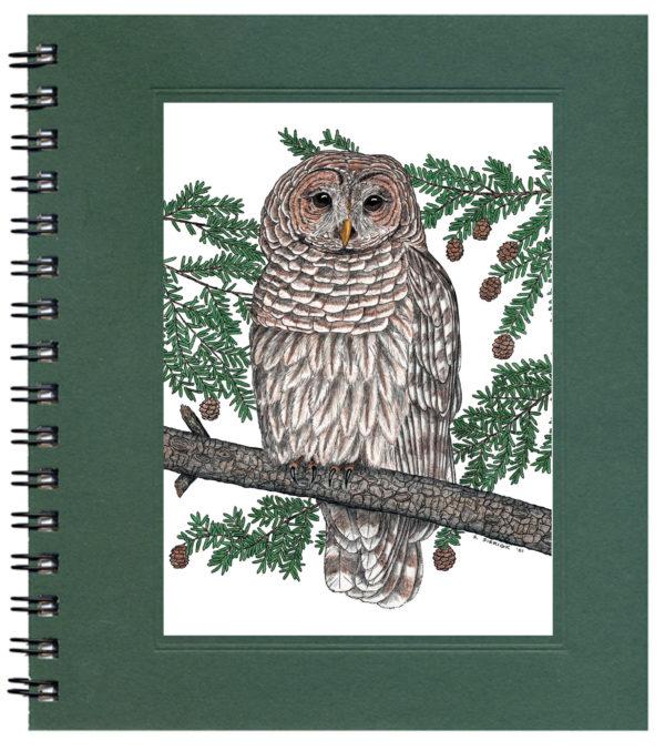 Barred Owl Notecard