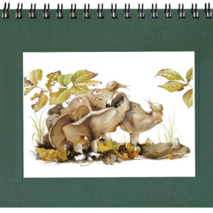 Milky Cap Mushrooms Journal