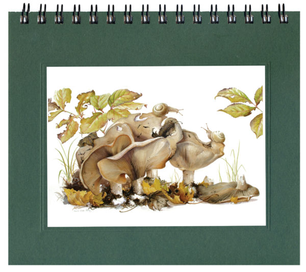 Milky Cap Mushrooms Journal