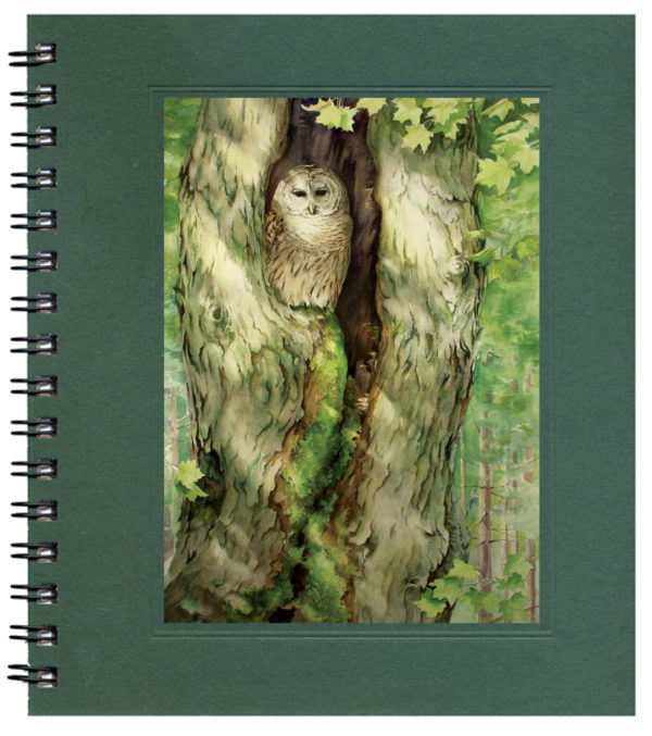 Sanctuary for Barred Owl Notecard