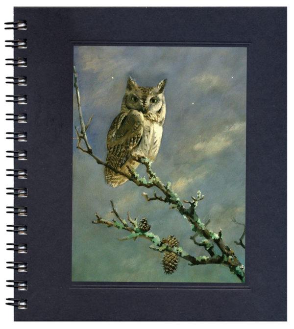 Screech Owl Notecard