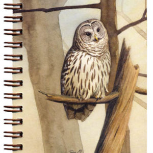 Cover image - Barred Owl Mini Journal