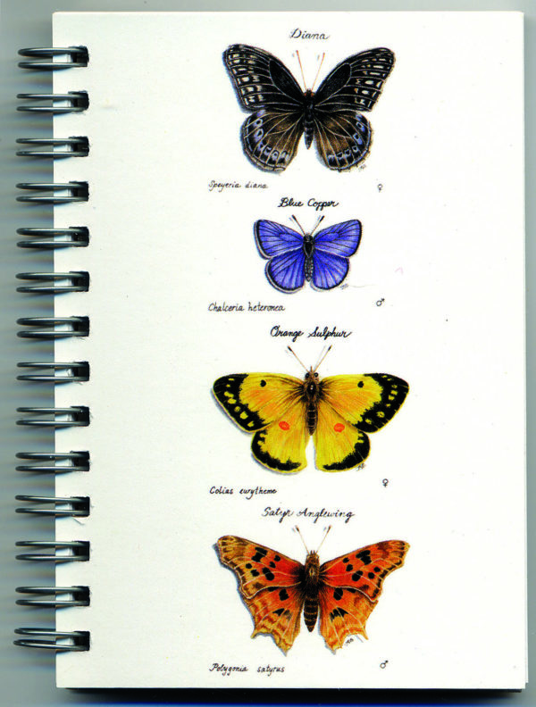 Cover image - Butterflies Mini Journal