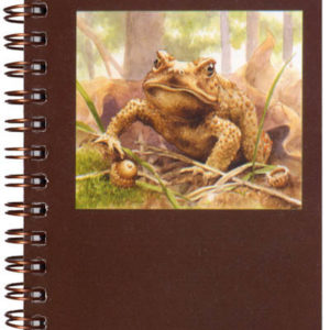 Cover image - American Toad Mini Journal