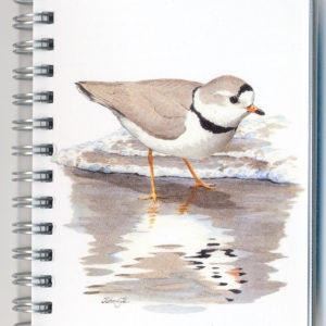 Cover image - Piping Plover Mini Journal