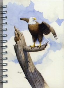 Cover image - Bald Eagle Mini Journal