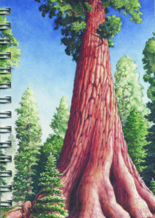Cover image - Giant Sequoia Mini Journal