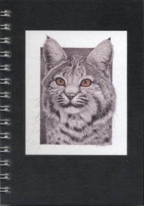 Cover image - Bobcat mini journal