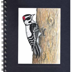 Downy Woodpecker Notecard