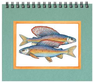 Arctic Grayling Notecard