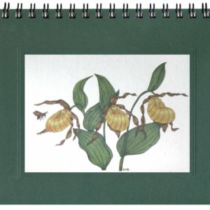 Yellow Lady's Slipper Notecard