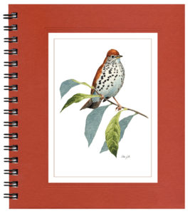 Wood Thrush Notecard