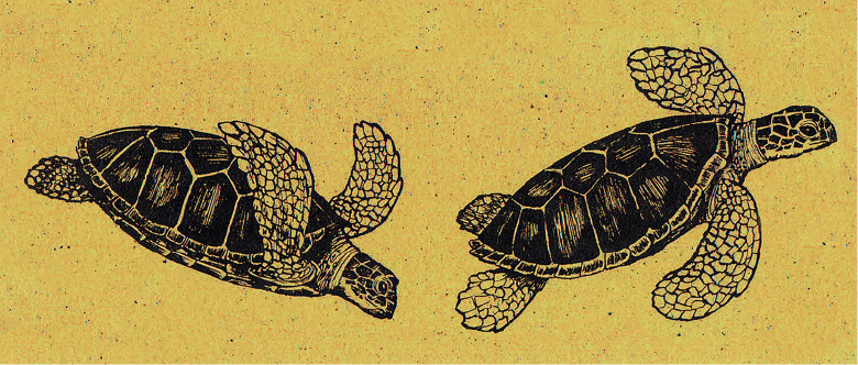 SeaTurtles_Banner_Animals